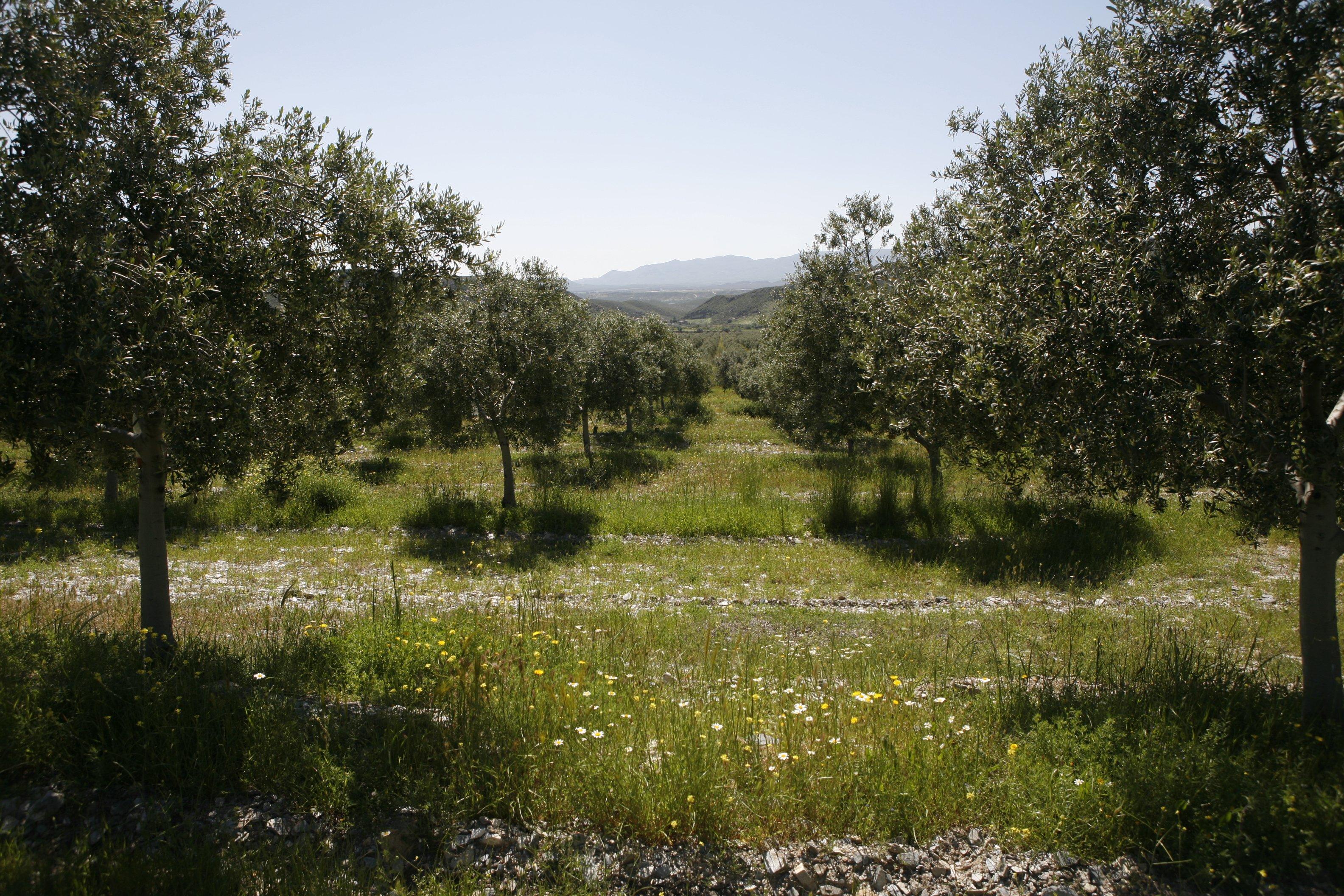 el olivar como ecosistema