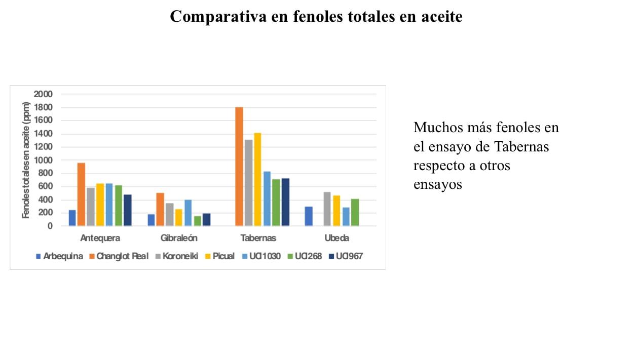 comparativa_fenoles_totales_aceite