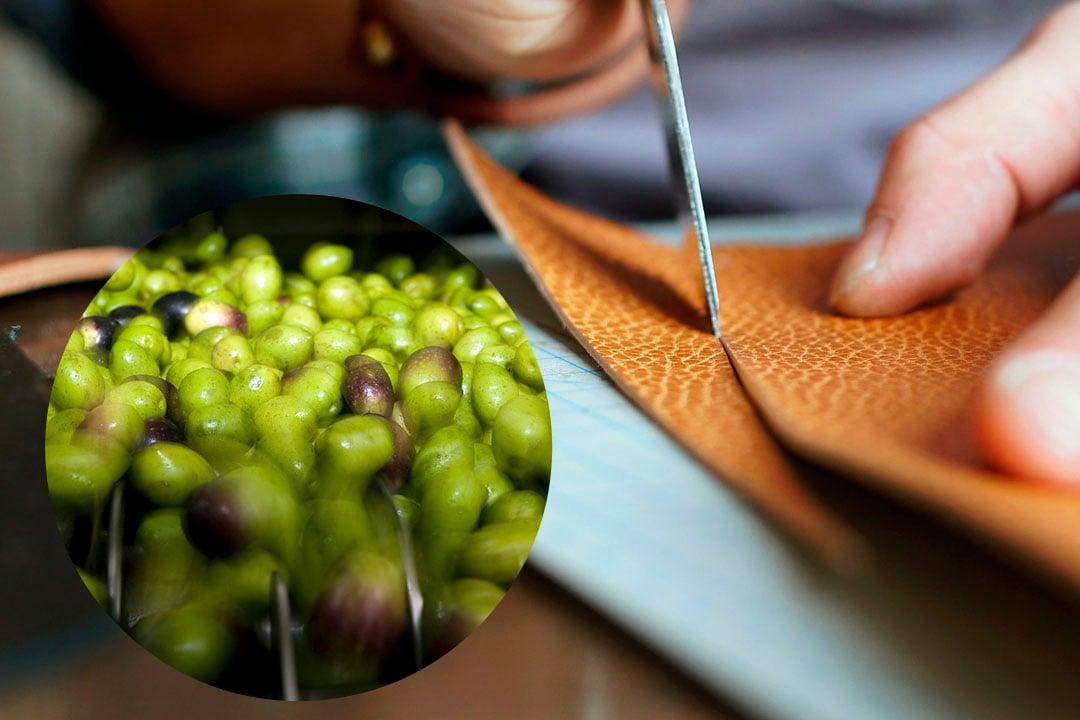 curtido-pieles-aceite-oliva-oro-del-desierto-blog